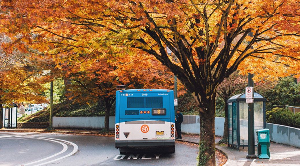 Make the Most of Autumn: 14 Transit-Friendly Fall Activities